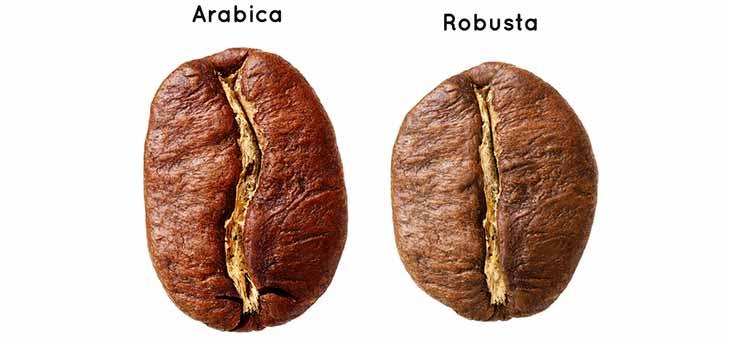 coffee types in guatemala